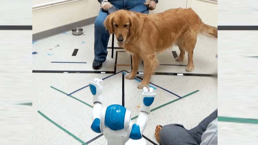Cão atende a comando de robô durante experimento realizado nos EUA - Social Robotics Lab/Yale University