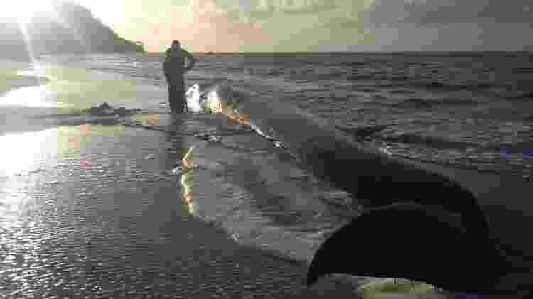 Baleia da espécie Fin com 13 metros de comprimento - Instituto Biota - Instituto Biota