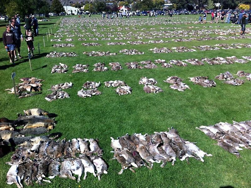 26.mar.2016 - Foto de arquivo mostra resultado de uma das caçadas anuais a coelhos no Alexandra Lions Club em 2011