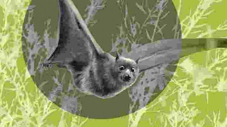 Morcegos polinizam mais de 500 espécies de plantas - Getty Images/BBC - Getty Images/BBC