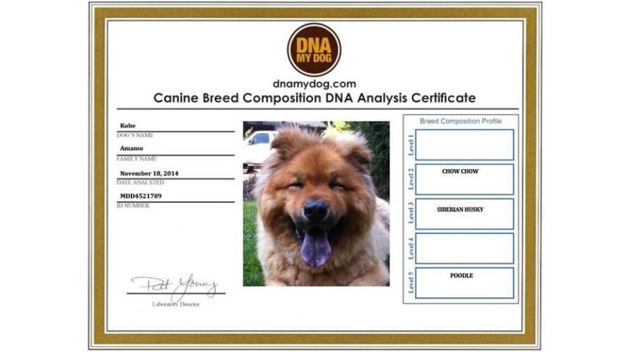 Empresa norte-americana DNA My Dog faz teste genético em cães - Divulgação/DNA My Dog