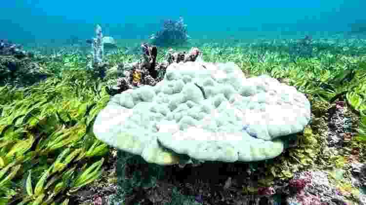 Prados de ervas marinhas no banco de Saya de Malha ajudam o oceano a absorver carbono - Greenpeace - Greenpeace