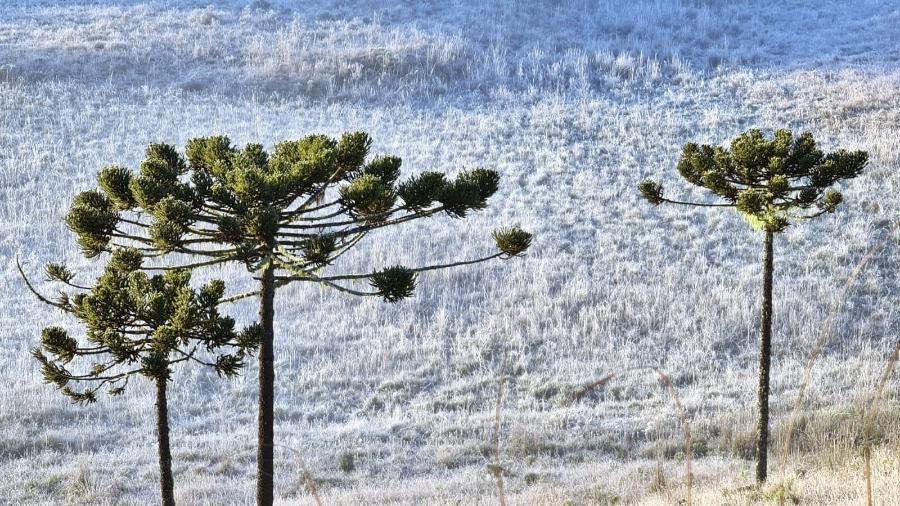Geada no Vale do Caminhos da Neve com a temperatura na casa de -4.2ºC - Mycchel Legnaghi / São Joaquim Online