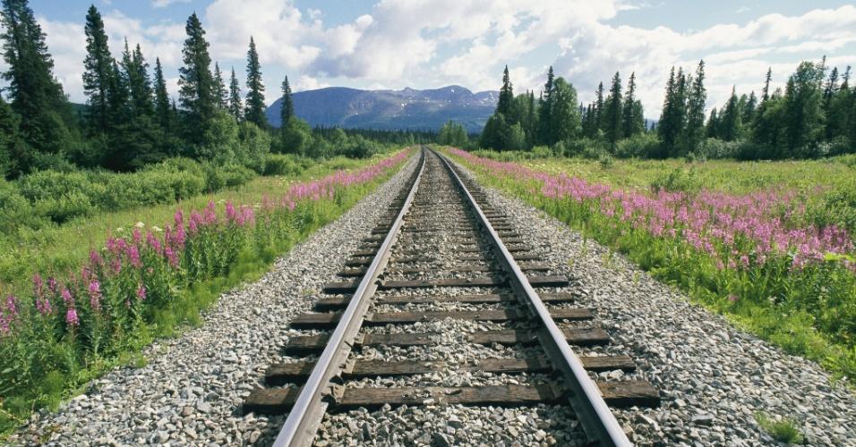 8.set.2016 - Visão do horizonte na estrada de ferro do Alasca, a maior linha férrea do Estado pertencente aos EUA, com cerca de 800 km. A construção da ferrovia  teve início em 1903. Atualmente ela liga a cidade de Seward à Fairbanks