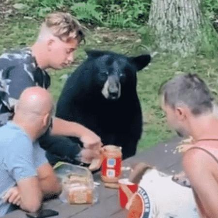 O urso-negro foi alimentado pela família enquanto tudo era filmado - Reprodução