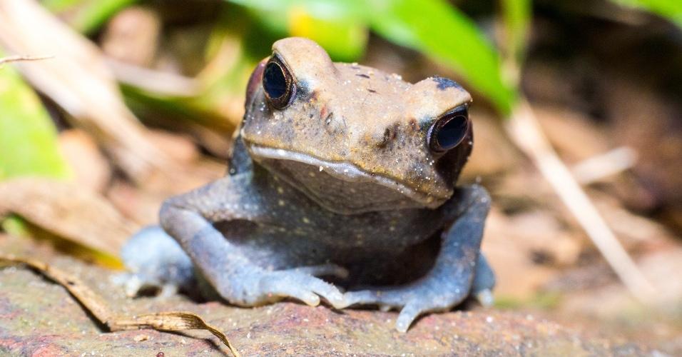 19.abr.2017 - Um registro da micro fauna no gigante Parque Nacional Montanhas de Tumucumaque
