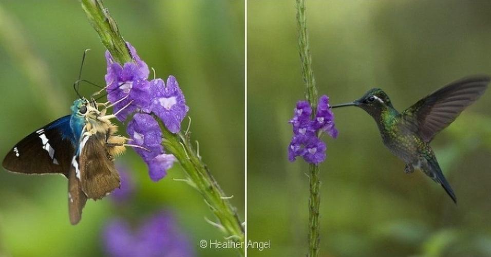 Na foto acima, por exemplo, um beija-flor e uma mariposa polinizam um gervão. Angel já publicou mais de 60 livros com imagens de natureza