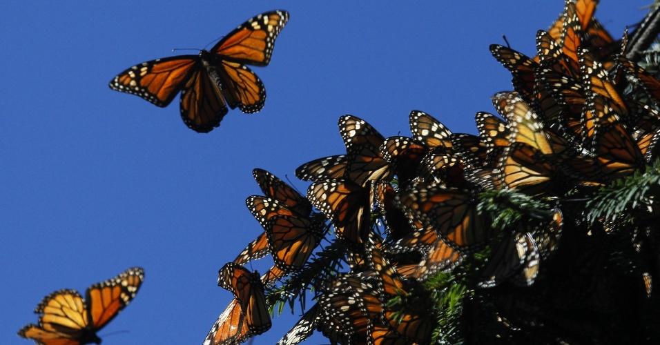 Reserva da Biosfera da Borboleta-Monarca, no México