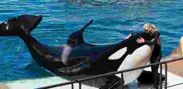 orca_2 - Marineland - Marineland