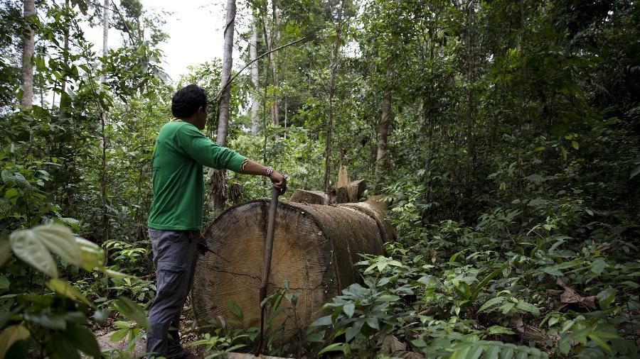 Na terra índigena Alto Turiaçu, no Maranhão, indígenas da etnia Kaapor procuram vestígios de madeireiros na mata fechada; as árvores derrubadas pelos invasores demoram 500 anos para crescer - Isadora Brant/ Folhapress