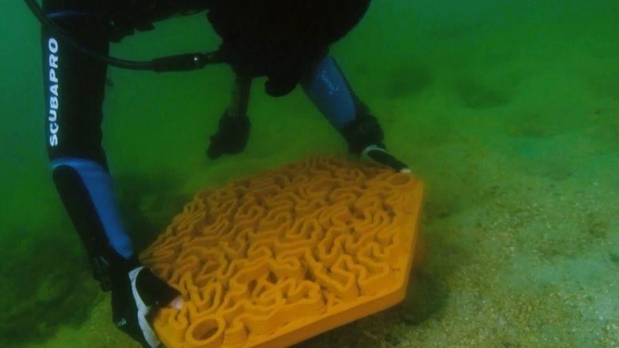 """Mergulhador instala coral """"cérebro"""" de coral 3D no fundo do mar - Reprodução/Youtube"""