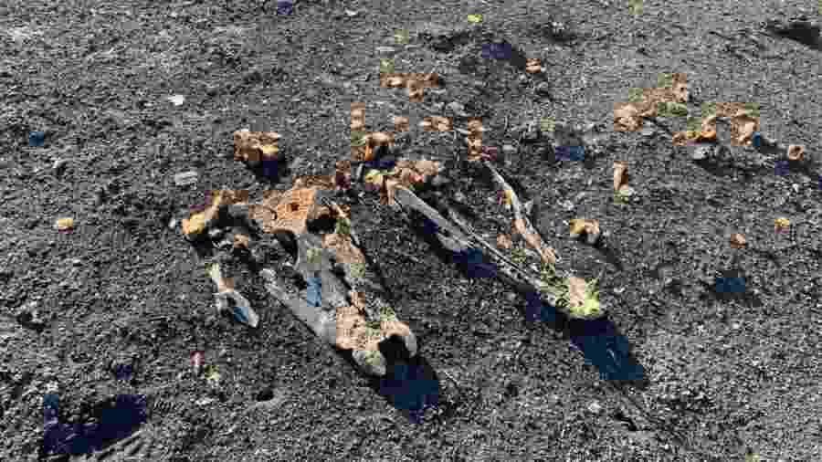 """Carcaça de animal consumido pelo fogo na região do Pantanal. Material orgânico de """"cemitérios"""" serve de combustível para novos incêndios - Angelo Rabelo/Fundação Homem Pantaneiro"""