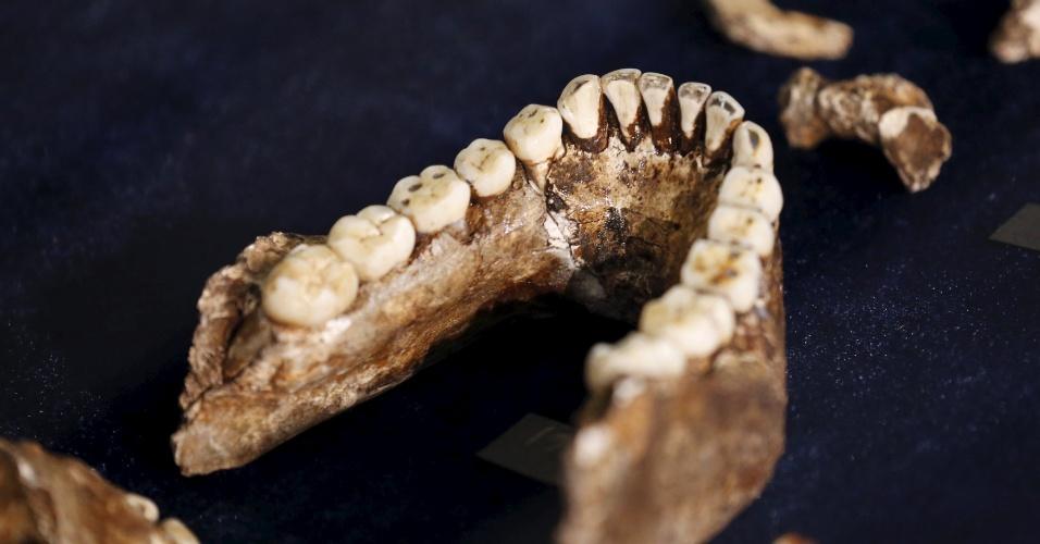 10.set.2015 - Arcada dentária do Homo Naledi foi encontrada em caverna profunda de difícil acesso, perto de Johannesburgo (África do Sul), na área arqueológica conhecida como