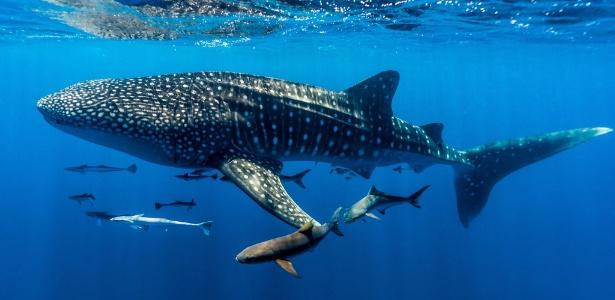 Buscar peixes grandes é uma das dicas do fotógrafo