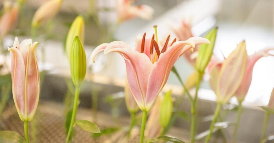 """Outro perfume que tem uma fabricação peculiar é o Lily Eau de Parfum. Segundo o especialista em fragrâncias da marca, Cesar Veiga, o produto é feito a partir de um processo chamado """"enfleurage"""", uma forma artesanal para obtenção de óleos essenciais das flores"""