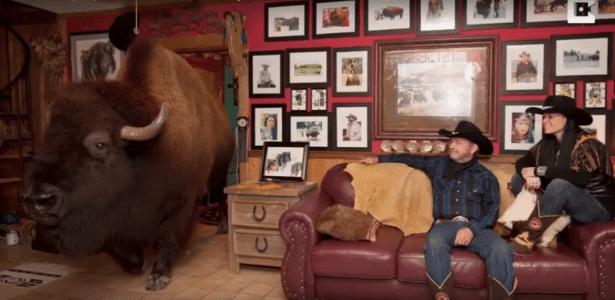 Búfalo Wild Thing caminha pela casa do casal Bridges, no Texas, EUA