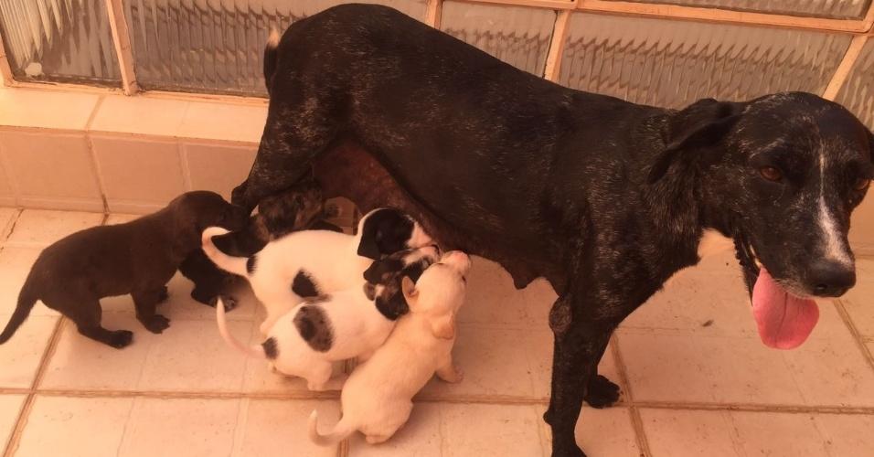 A estudante de medicina veterinária Amália Cavedal, de 32 anos, resgatou toda a família. Dois filhotes foram doados
