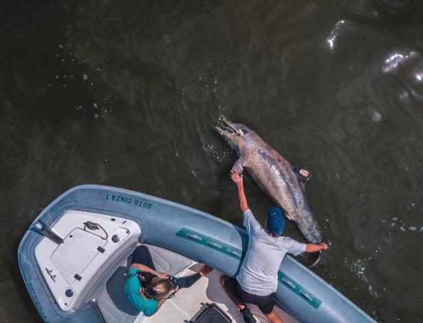 Golfinho morto é resgatado por cientistas na baía de Sepetiba