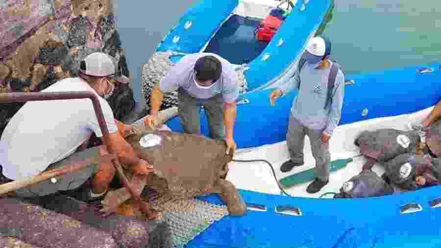 """15.jun.2020 - Tartaruga Diego sai do cativeiro após ajudar a salvar espécie com seu """"apetite sexual"""" na Ilha Espanhola, parte do Arquipélago de Galápagos - Reprodução/Twitter"""