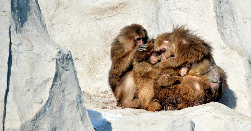 24.jan.2016 - Uma família de macacos tibetanos se abraça para aquecimento no Parque da Vida Selvagem de Daqingshan em Hohhot, capitão da Região Autônoma da Mongólia Interior, no norte da China. Região enfrenta baixas temperaturas neste inverno