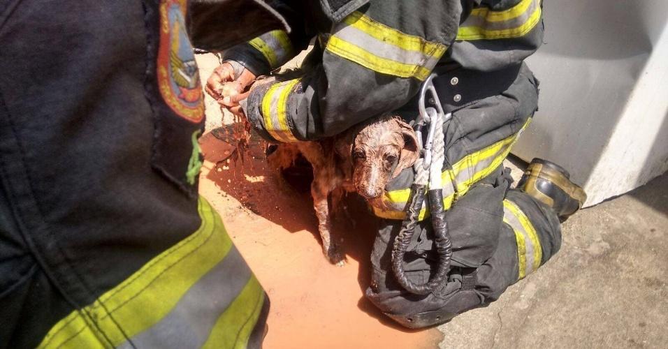10.mar.2016 - Um cão foi resgatado com vida por bombeiros depois de uma barreira cair sobre uma casa no Jardim Ângela, na zona sul de São Paulo. Foi a dona do imóvel que acionou os Corpo de Bombeiros. Ela informou que não havia vítimas, mas que o animal de estimação estava desaparecido. A equipe seguiu os grunhidos do cão, escavou e acabou encontrando o animal