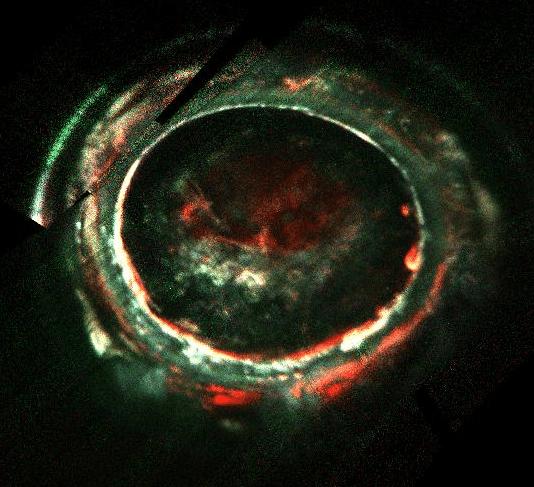 6.set.2017 - Estudo da Nature publicado nesta quarta-feira (6) apontou que as auroras de Júpiter são mais energéticas do que as da Terra, podendo ultrapassar os 400 quiloelétron-volts, uma carga elétrica muito mais alta do qualquer aurora terrestre já registrada. A imagem mostra uma aurora captada pela sonda Juno no sul do maior planeta do Sistema Solar, em fevereiro de 2017 --o registro, realizado por meio de fotografia ultravioleta, mostra diferentes faixas de cores, que representam as diferentes intensidades energéticas dos elétrons da aurora de Júpiter