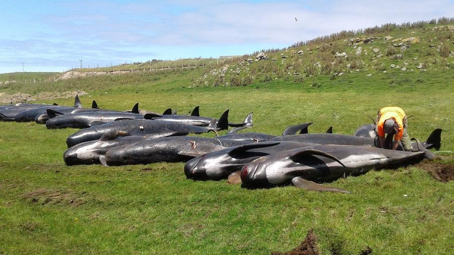 30.nov.2018 - Baleias-piloto mortas na costa das Ilhas Chatham, Nova Zelândia - New Zealand/Handout via REUTERS