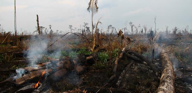 Maior desde 2008 | Dado anual de desmatamento da Amazônia deve indicar entre 9 mil e 11 mil km² de devastação