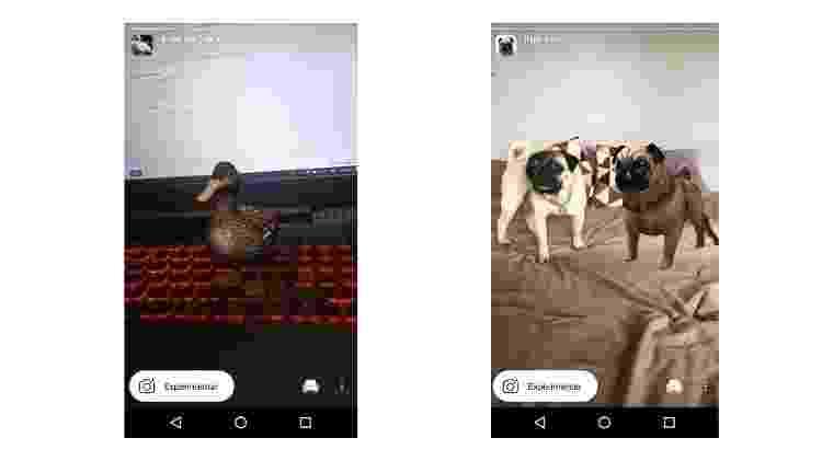 Veja mais filtros de bichos para trollar geral no Instagram - 2 - Reprodução - Reprodução