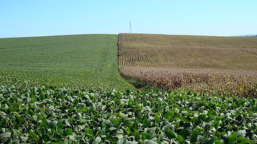 Plantios de soja (à esquerda) e milho em Cruz Alta, Rio Grande do Sul - Staff Photographer