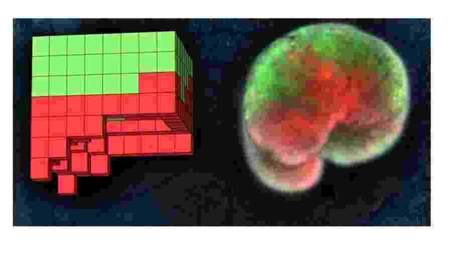 Modelo anatômico de um organismo projetado por computador (esq) e o robô vivo construído inteiramente a partir de células da pele de sapo (verde) e do músculo cardíaco (vermelho) - Sam Kriegman, UVM