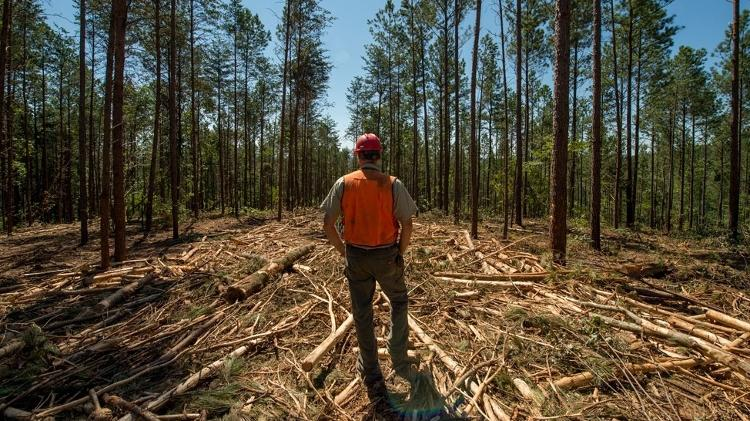 Floresta - US Forest Service - US Forest Service