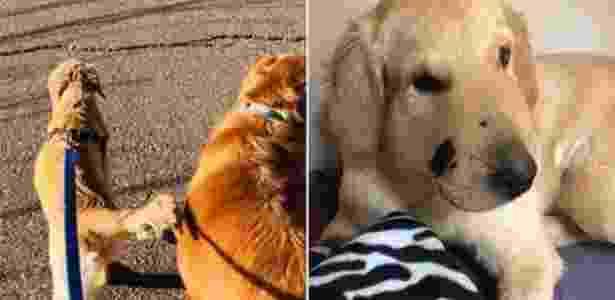 Cachorro - Paula Godwin - Paula Godwin
