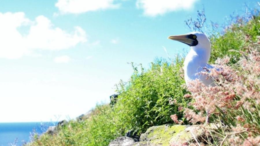 Redonda é a terceira e menos conhecida das ilhas de Antígua e Barbuda - SHANNA CHALLENGER