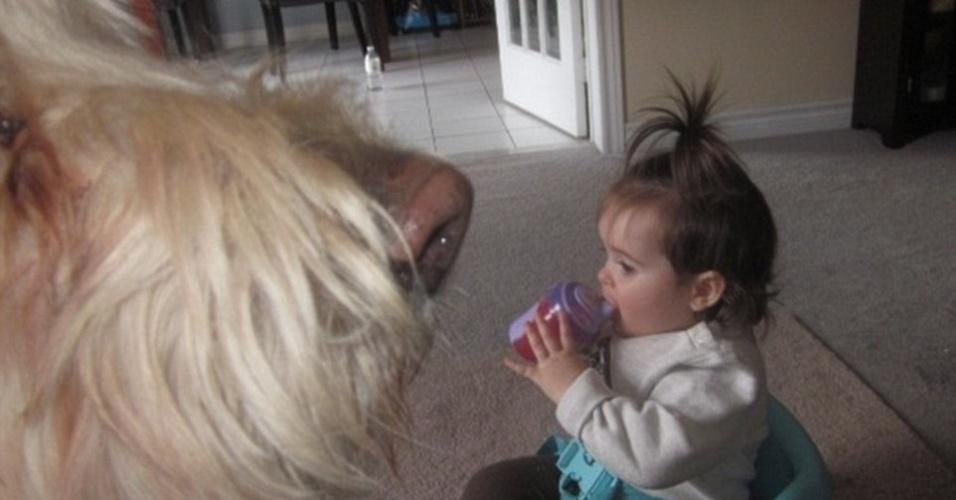 21.jul.2015 - O cachorro gigante não está cheirando a menininha enquanto ela toma um suco. Na verdade, o animal só colocou o focinho na frente da câmera no exato momento em que a foto estava sendo tirada. É tudo culpa da perspectiva