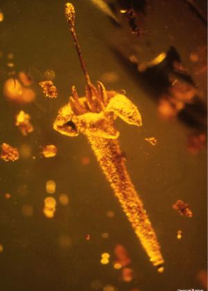 As flores datam do fim do período cretáceo