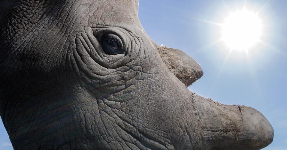 """24.mar.2016 - Este é um dos últimos três indivíduos da subespécie rinoceronte-branco-do-norte. A fotografia está no livro """"A Jornada do Rinoceronte"""", que retrata a atual situação dos rinocerontes pelo mundo. Segundo a ONG Save The Rhino, os animais podem ser extintos da natureza até 2026"""
