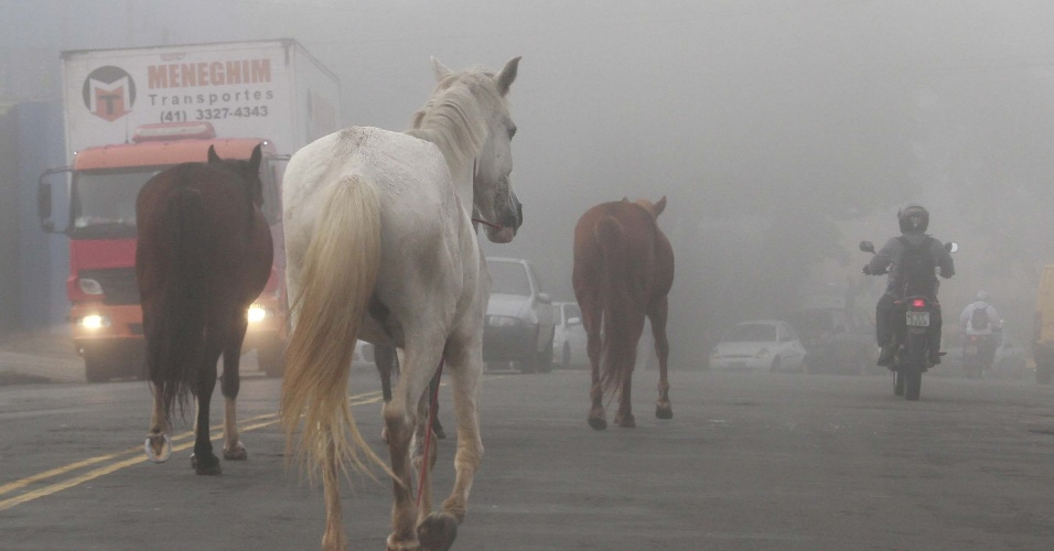 8.jun.2016 - Cavalos passeiam soltos durante forte neblina em uma movimentada avenida de Campinas, em São Paulo