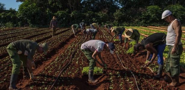 Funcionários trabalham em plantação de verdura em Alamar, em Cuba
