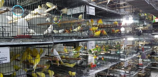 Pássaros são expostos em gaiolas para venda no Mercado Central de Belo Horizonte