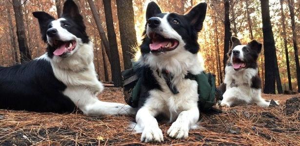 As três cadelas chegam a percorrer 30 quilômetros por bosques da região de El Maule