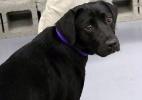 CIA demite cadela por ela se recusar a cheirar bombas (Foto: Reprodução/CIA)