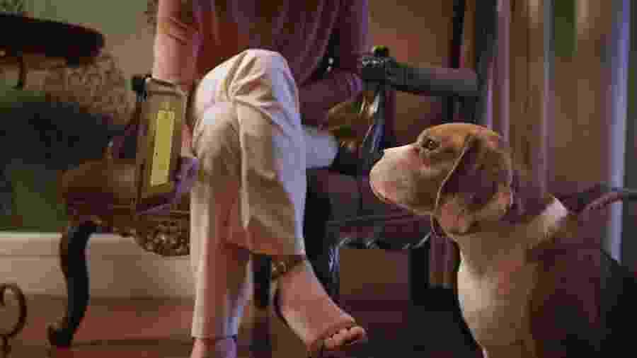 Reconhecimento facial indica qual produto seu cão mais gostou - Divulgação
