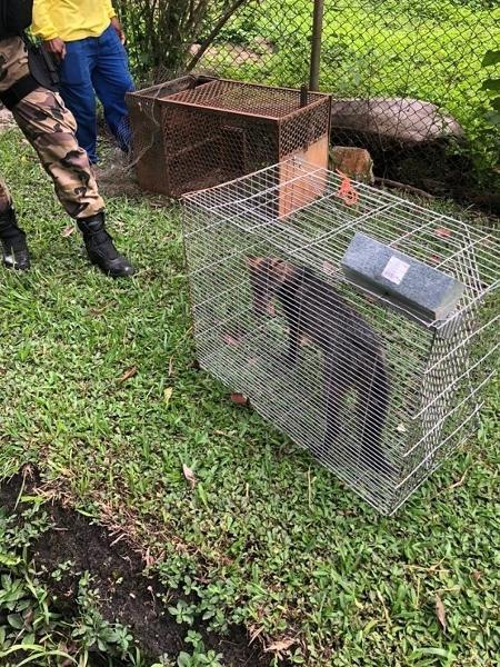 Raposa foi capturada na Granja do Torto - PMDF/Divulgação