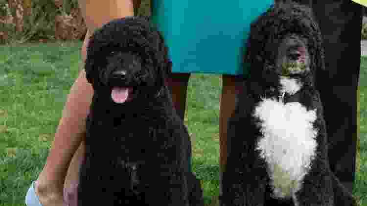 Bo (à dir.) e Sunny (à esq) são de uma raça rara - Casa Branca - Casa Branca