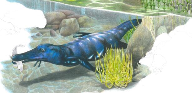 Fóssil pertence a um grupo de anfíbios primitivos que tinha a forma semelhante a uma salamandra