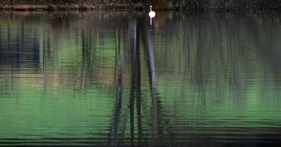 18.nov.2016 - Cisne nada em uma lagoa perto de Steingaden, na Alemanha