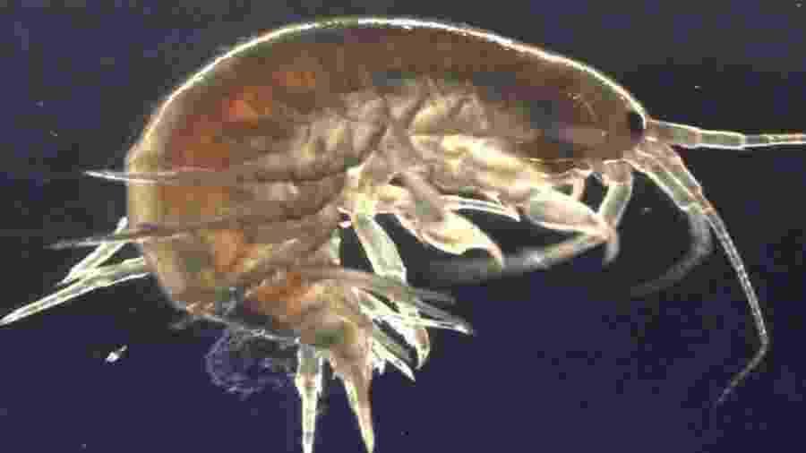 Descoberta de cocaína e outras substâncias em camarões foi vista com surpresa por pesquisadores - King