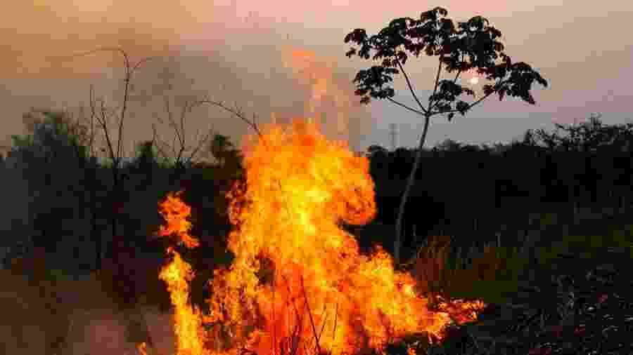 Foco de incêndio na região do Pantanal, no MS, às margens da rodovia BR-262 - Chico Ribeiro/Governo de MS