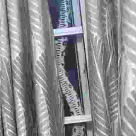 Uma família em Wyoming, na Austrália, descobriu uma cobra píton no teto de casa  - Reprodução/ABC Sydney